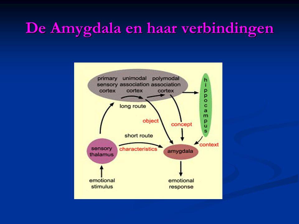 De Amygdala en haar verbindingen