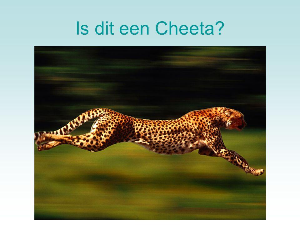 Is dit een Cheeta Even een verhaal tussendoor.