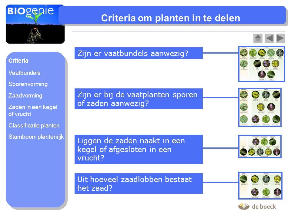Criteria om planten in te delen