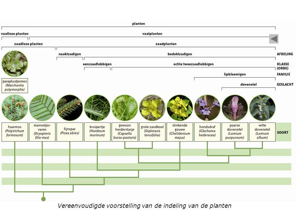 Vereenvoudigde voorstelling van de indeling van de planten