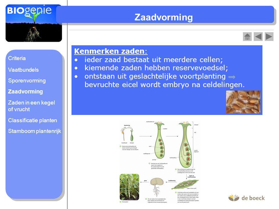 Zaadvorming Kenmerken zaden: ieder zaad bestaat uit meerdere cellen;
