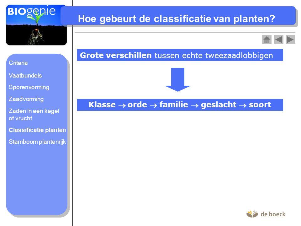 Hoe gebeurt de classificatie van planten