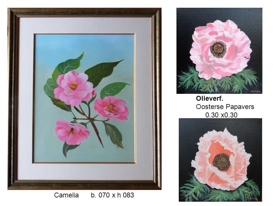 Olieverf. Oosterse Papavers 0.30 x0.30 Camelia b. 070 x h 083