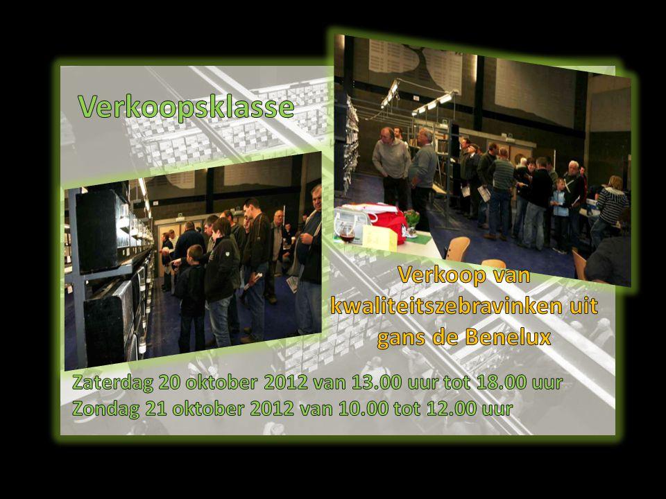 Verkoop van kwaliteitszebravinken uit gans de Benelux