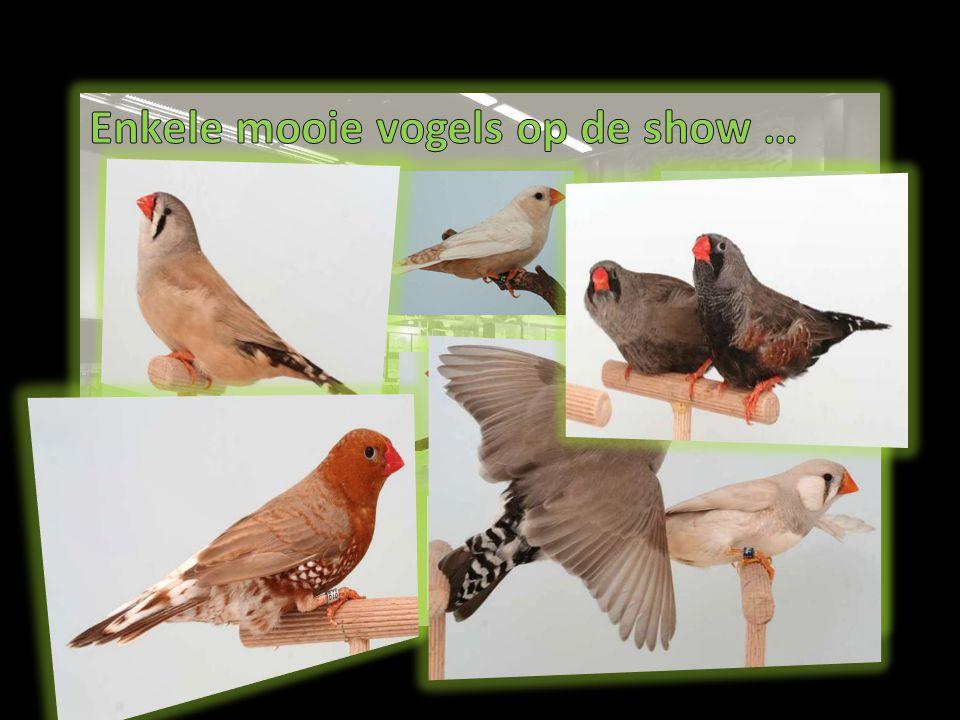 Enkele mooie vogels op de show …