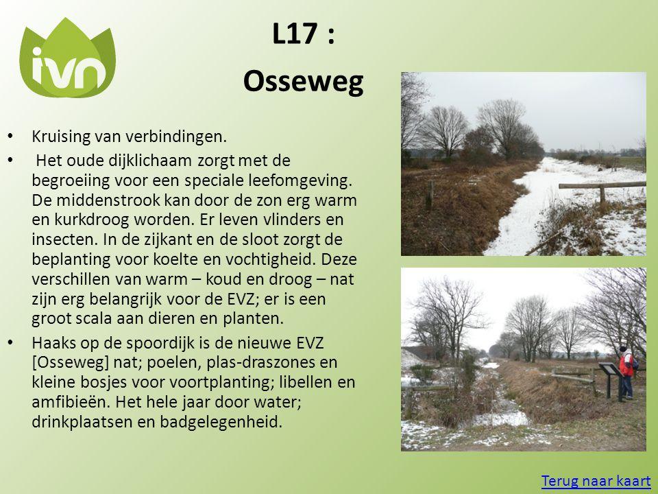 L17 : Osseweg Kruising van verbindingen.