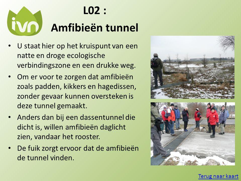 L02 : Amfibieën tunnel. U staat hier op het kruispunt van een natte en droge ecologische verbindingszone en een drukke weg.
