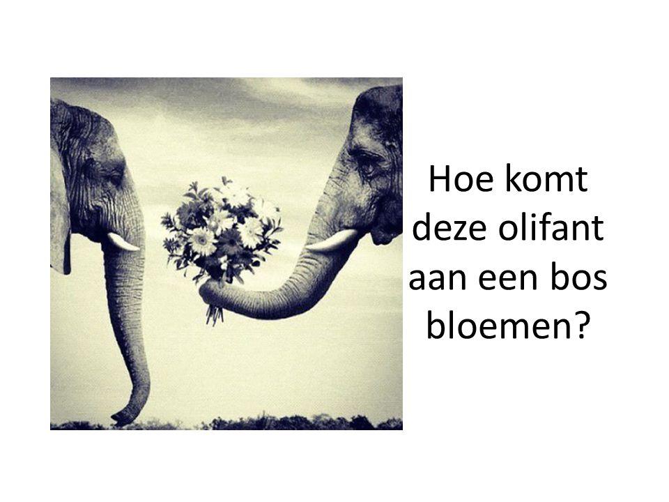 Hoe komt deze olifant aan een bos bloemen