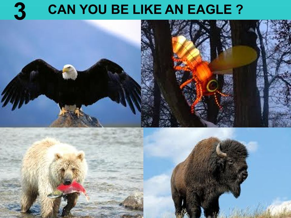 3 CAN YOU BE LIKE AN EAGLE