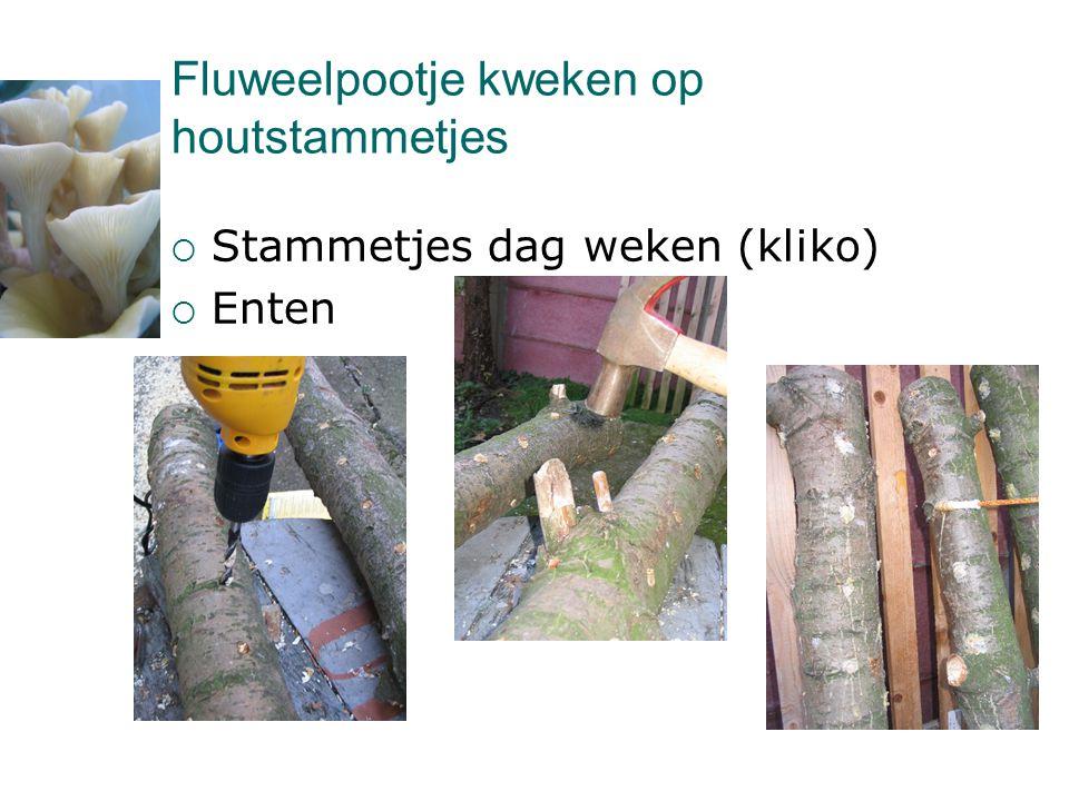 Fluweelpootje kweken op houtstammetjes