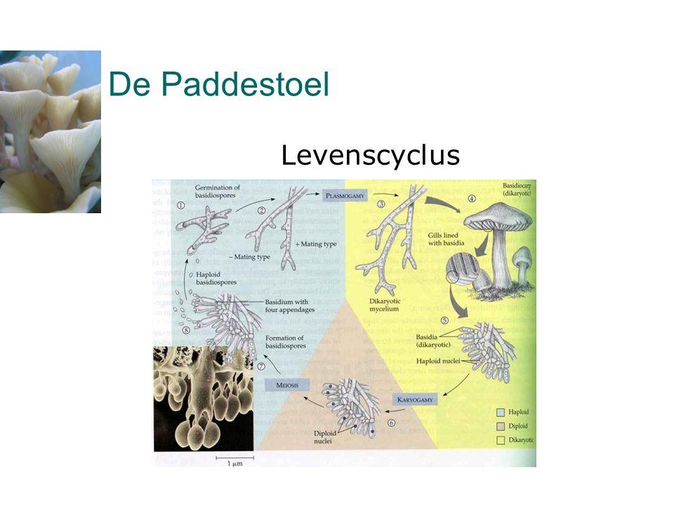 De Paddestoel Levenscyclus