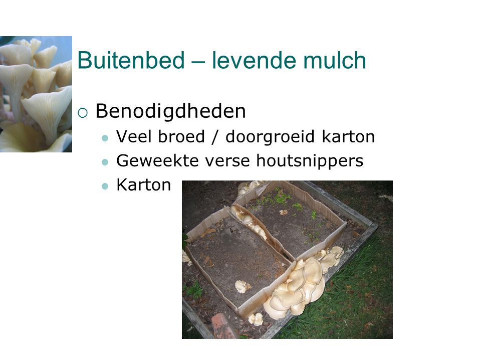 Buitenbed – levende mulch