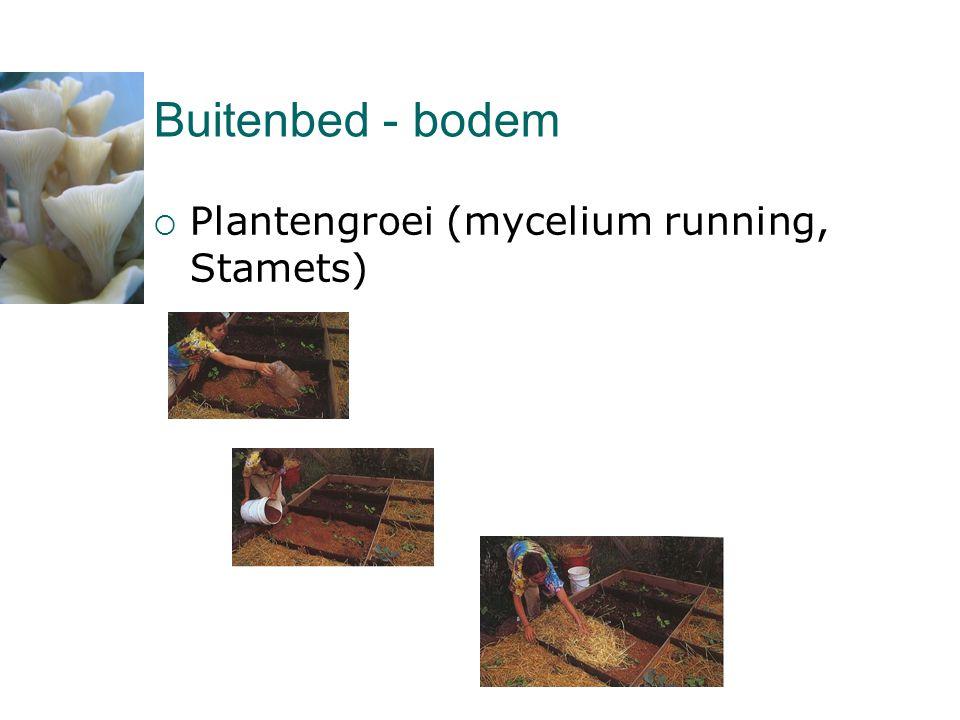 Buitenbed - bodem Plantengroei (mycelium running, Stamets)