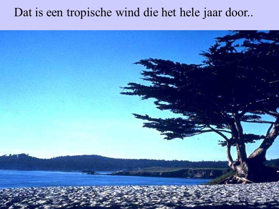 Dat is een tropische wind die het hele jaar door..