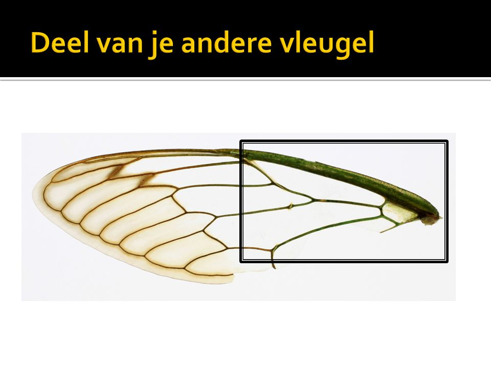 Deel van je andere vleugel