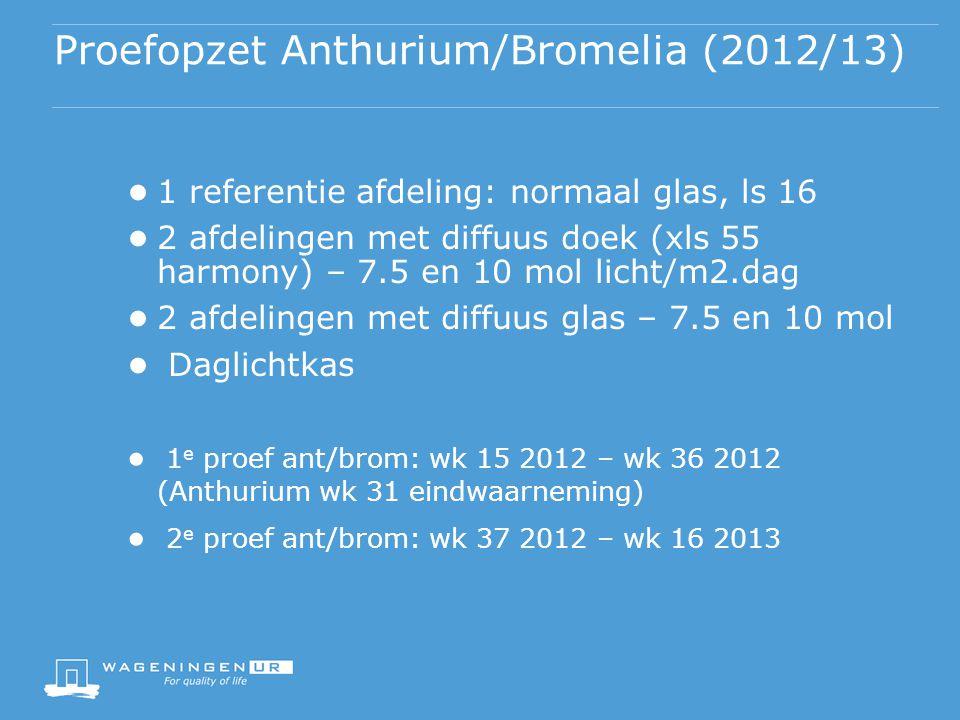 Proefopzet Anthurium/Bromelia (2012/13)