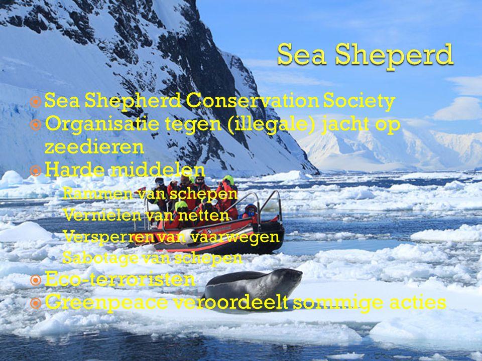 Sea Sheperd Sea Shepherd Conservation Society