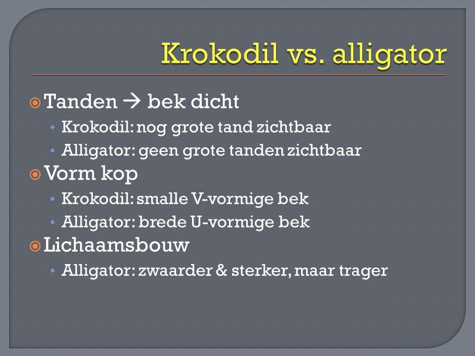 Krokodil vs. alligator Tanden  bek dicht Vorm kop Lichaamsbouw