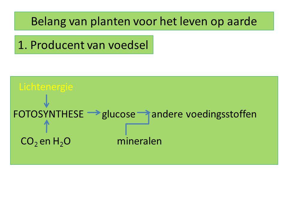 Belang van planten voor het leven op aarde