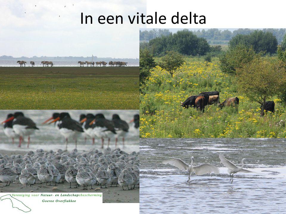 In een vitale delta
