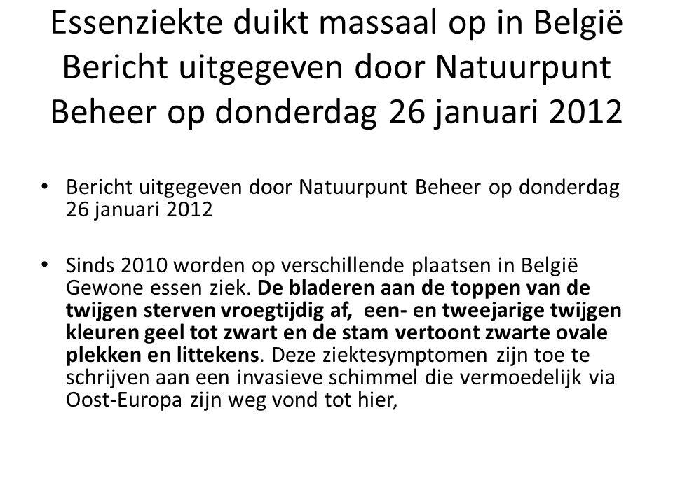 Essenziekte duikt massaal op in België Bericht uitgegeven door Natuurpunt Beheer op donderdag 26 januari 2012