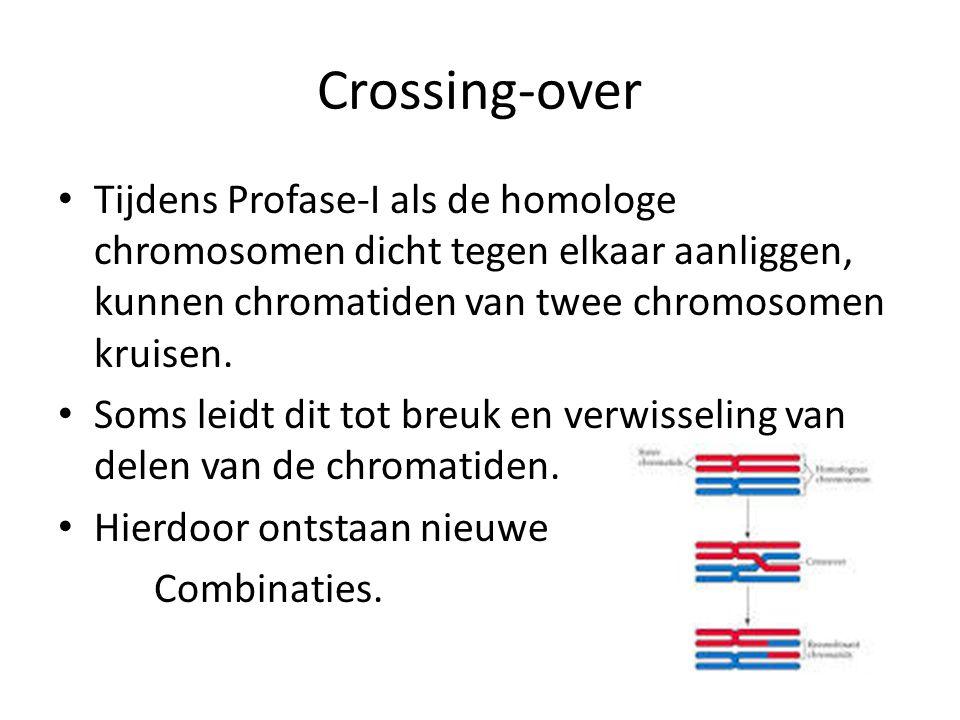 Crossing-over Tijdens Profase-I als de homologe chromosomen dicht tegen elkaar aanliggen, kunnen chromatiden van twee chromosomen kruisen.