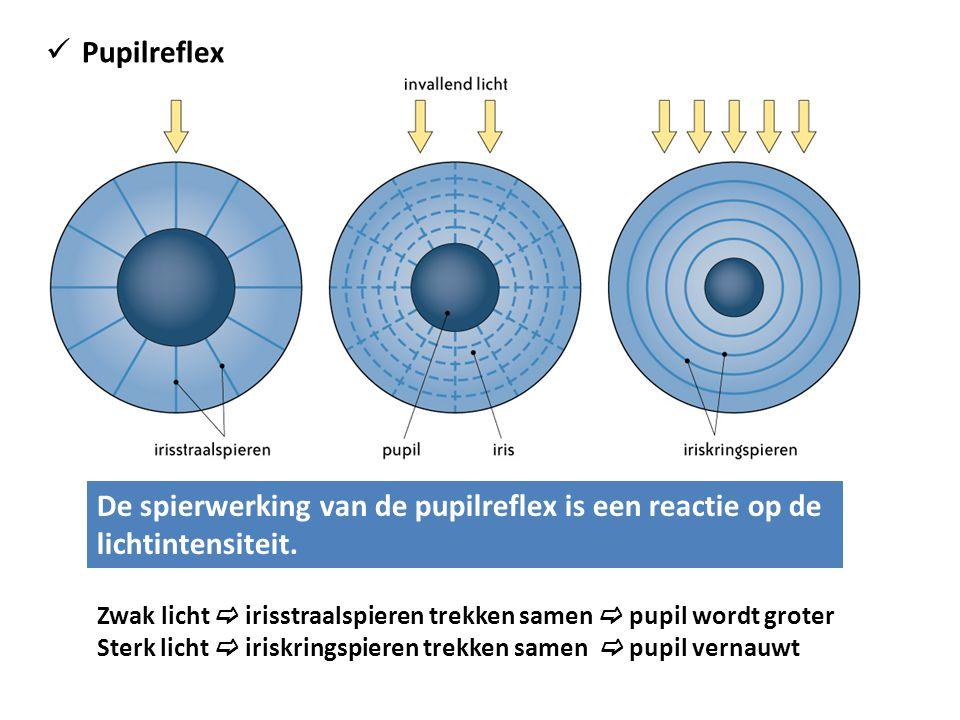 Pupilreflex De spierwerking van de pupilreflex is een reactie op de lichtintensiteit.