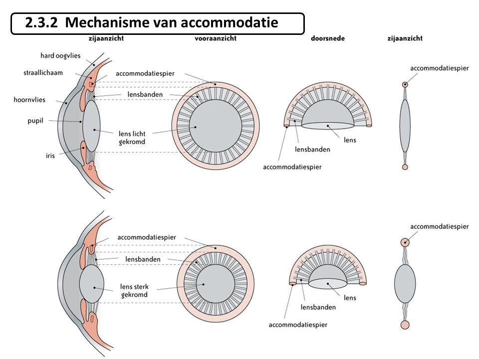 2.3.2 Mechanisme van accommodatie