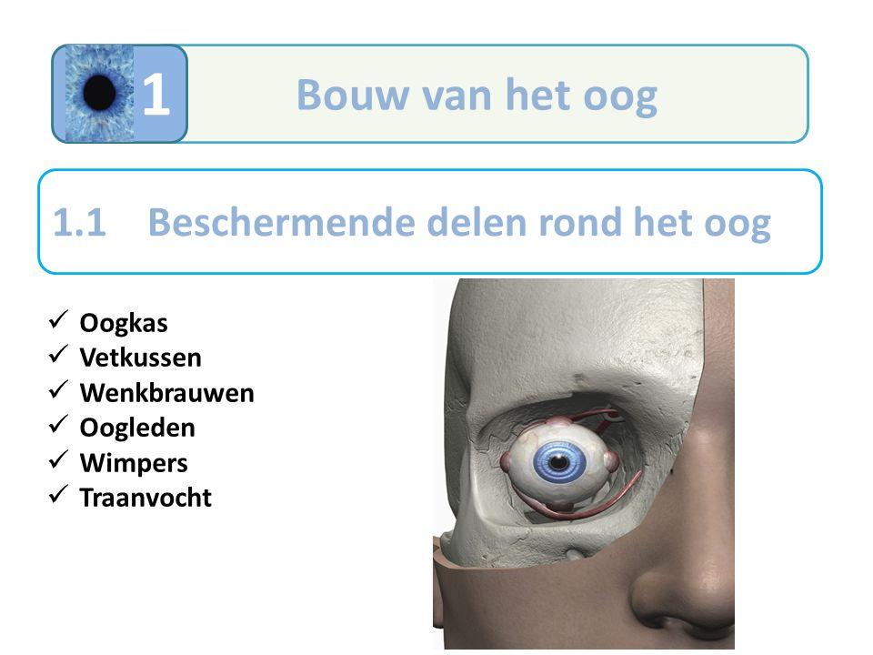 1 Bouw van het oog 1.1 Beschermende delen rond het oog Oogkas