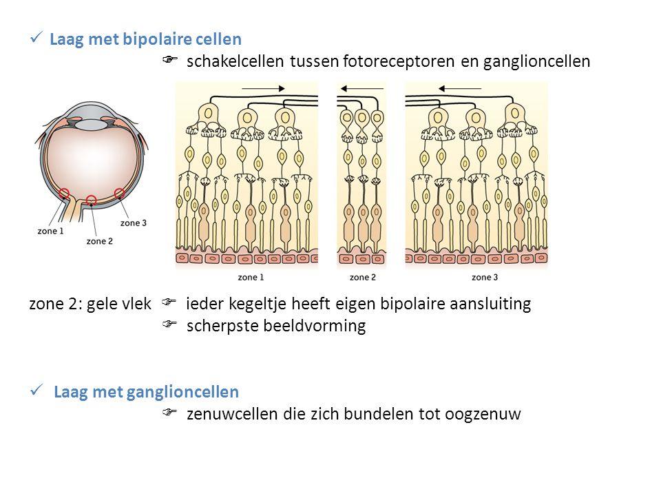 Laag met bipolaire cellen