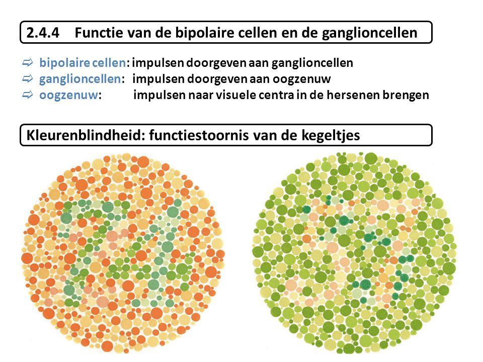 2.4.4 Functie van de bipolaire cellen en de ganglioncellen