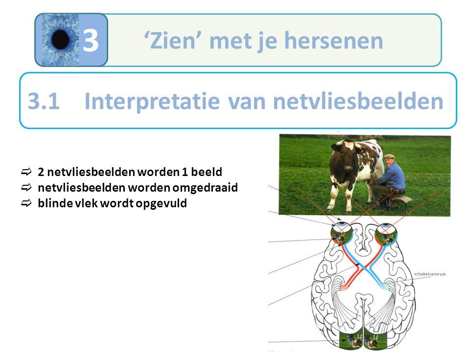 3 'Zien' met je hersenen 3.1 Interpretatie van netvliesbeelden