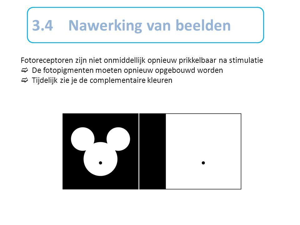 3.4 Nawerking van beelden Fotoreceptoren zijn niet onmiddellijk opnieuw prikkelbaar na stimulatie.