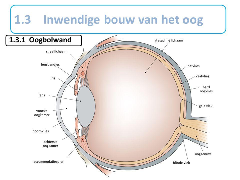 1.3 Inwendige bouw van het oog