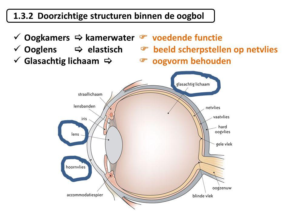 1.3.2 Doorzichtige structuren binnen de oogbol