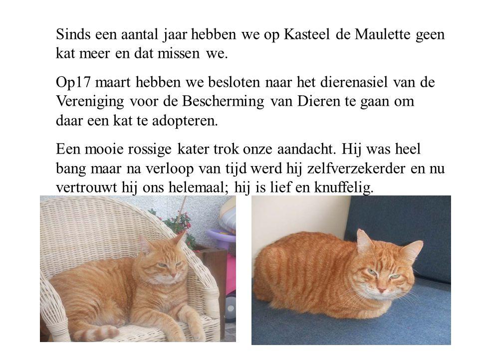 Sinds een aantal jaar hebben we op Kasteel de Maulette geen kat meer en dat missen we.