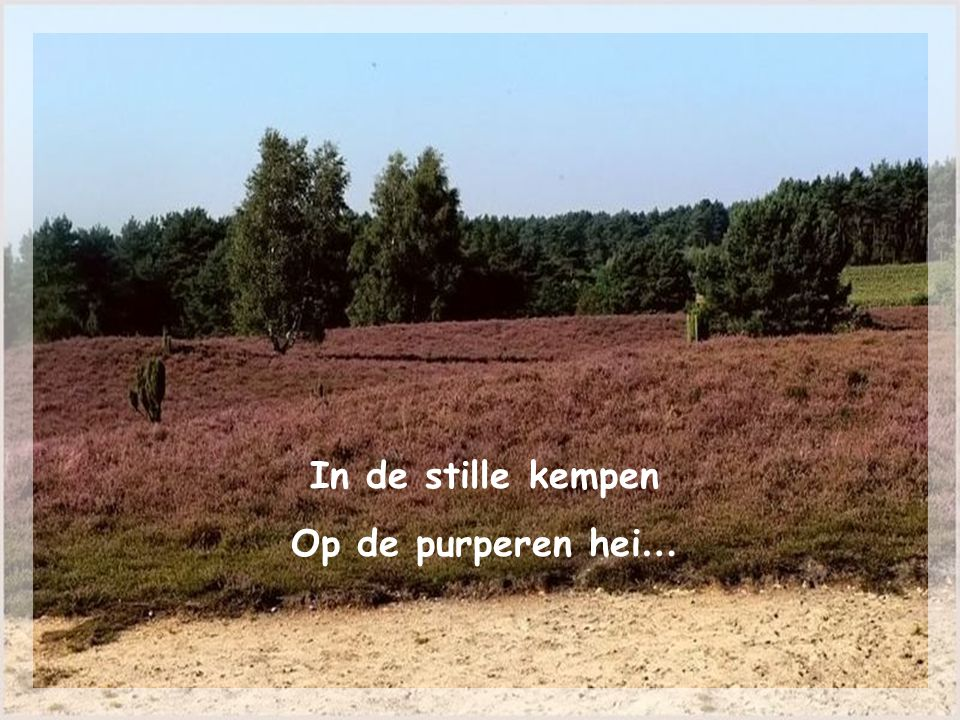 In de stille kempen Op de purperen hei…