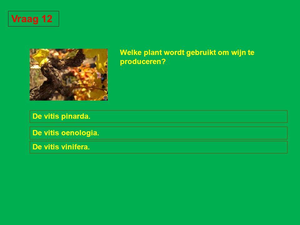 Vraag 12 Welke plant wordt gebruikt om wijn te produceren