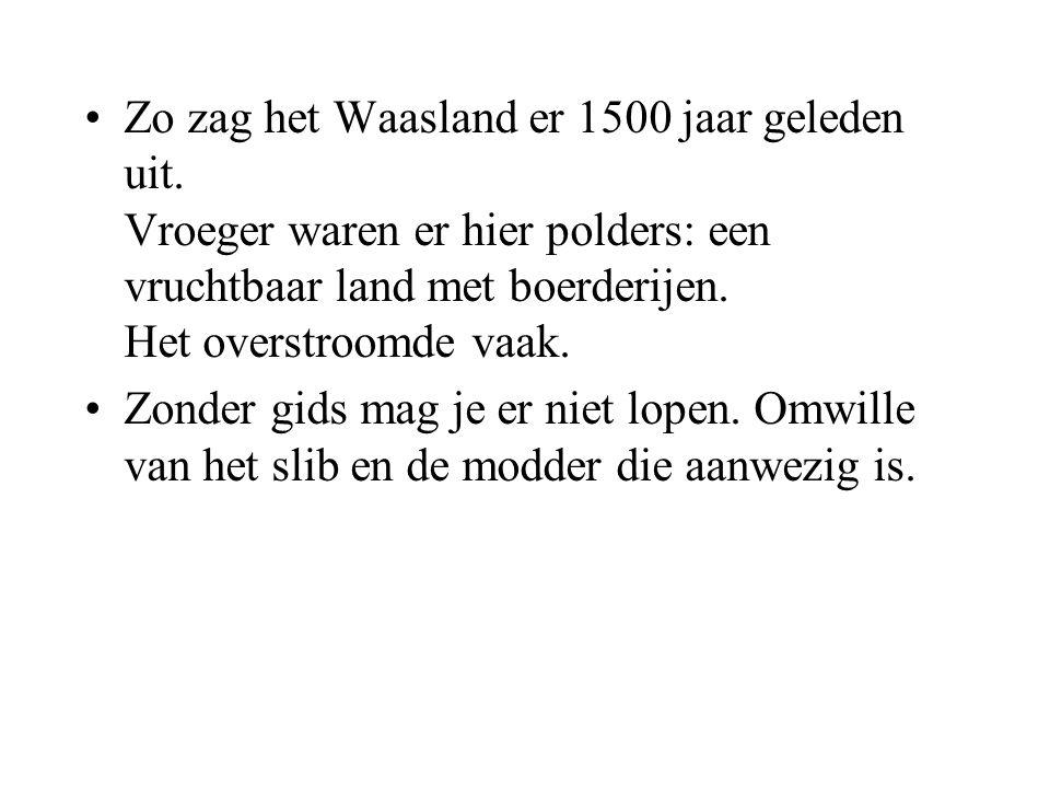 Zo zag het Waasland er 1500 jaar geleden uit