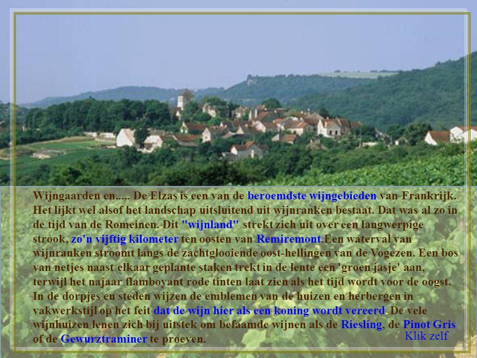 Wijngaarden en..... De Elzas is een van de beroemdste wijngebieden van Frankrijk. Het lijkt wel alsof het landschap uitsluitend uit wijnranken bestaat. Dat was al zo in de tijd van de Romeinen. Dit wijnland strekt zich uit over een langwerpige strook, zo n vijftig kilometer ten oosten van Remiremont.Een waterval van wijnranken stroomt langs de zachtglooiende oost-hellingen van de Vogezen. Een bos van netjes naast elkaar geplante staken trekt in de lente een groen jasje aan, terwijl het najaar flamboyant rode tinten laat zien als het tijd wordt voor de oogst. In de dorpjes en steden wijzen de emblemen van de huizen en herbergen in vakwerkstijl op het feit dat de wijn hier als een koning wordt vereerd. De vele wijnhuizen lenen zich bij uitstek om befaamde wijnen als de Riesling, de Pinot Gris of de Gewurztraminer te proeven.