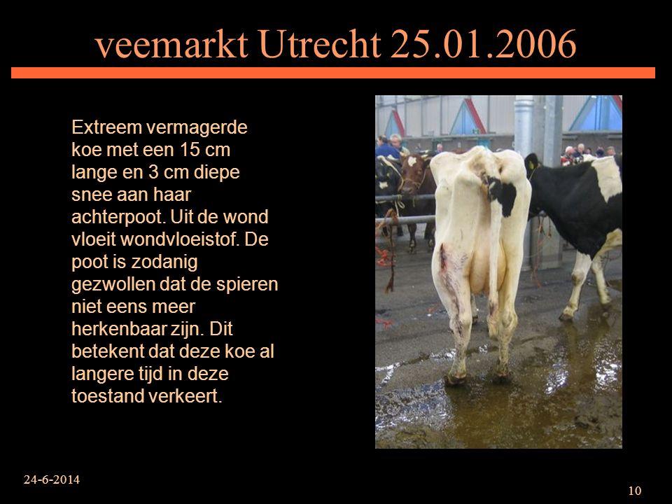 veemarkt Utrecht 25.01.2006