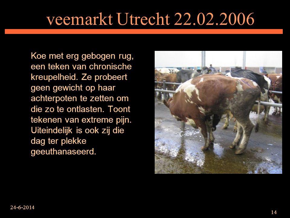 veemarkt Utrecht 22.02.2006