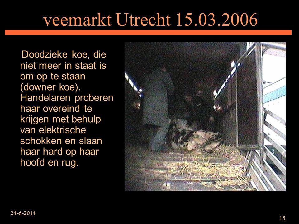 veemarkt Utrecht 15.03.2006