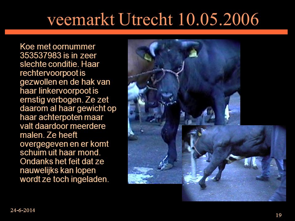 veemarkt Utrecht 10.05.2006