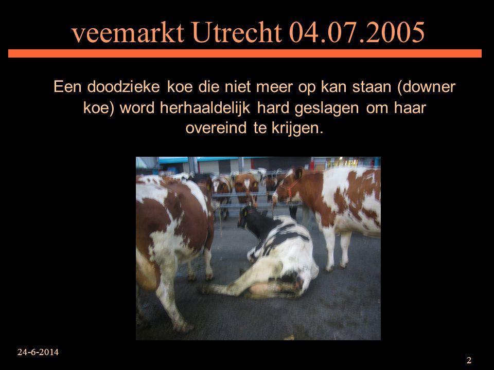 veemarkt Utrecht 04.07.2005 Een doodzieke koe die niet meer op kan staan (downer koe) word herhaaldelijk hard geslagen om haar overeind te krijgen.