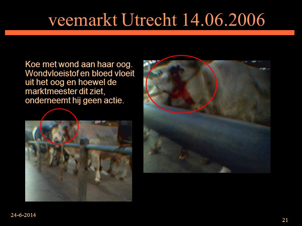 veemarkt Utrecht 14.06.2006