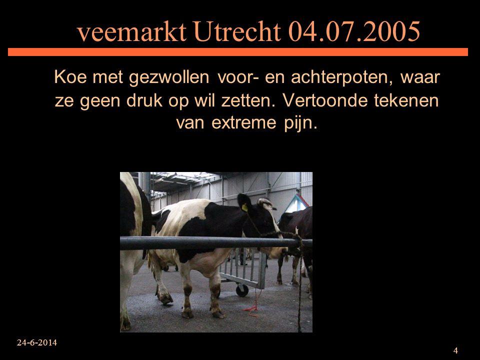 veemarkt Utrecht 04.07.2005 Koe met gezwollen voor- en achterpoten, waar ze geen druk op wil zetten. Vertoonde tekenen van extreme pijn.