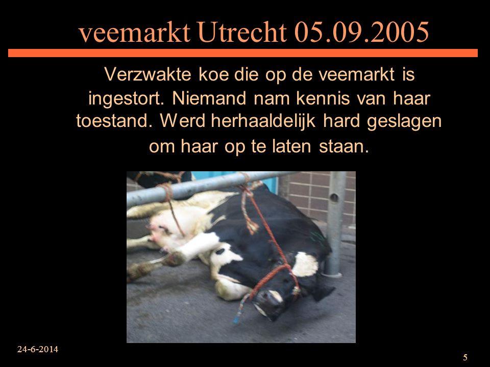 veemarkt Utrecht 05.09.2005