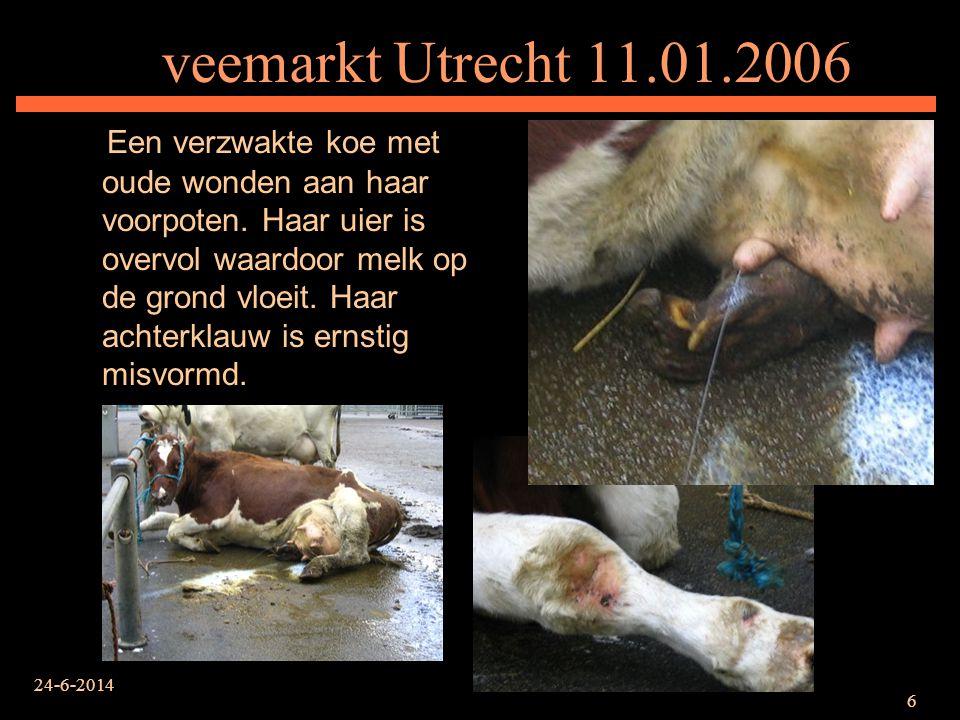 veemarkt Utrecht 11.01.2006