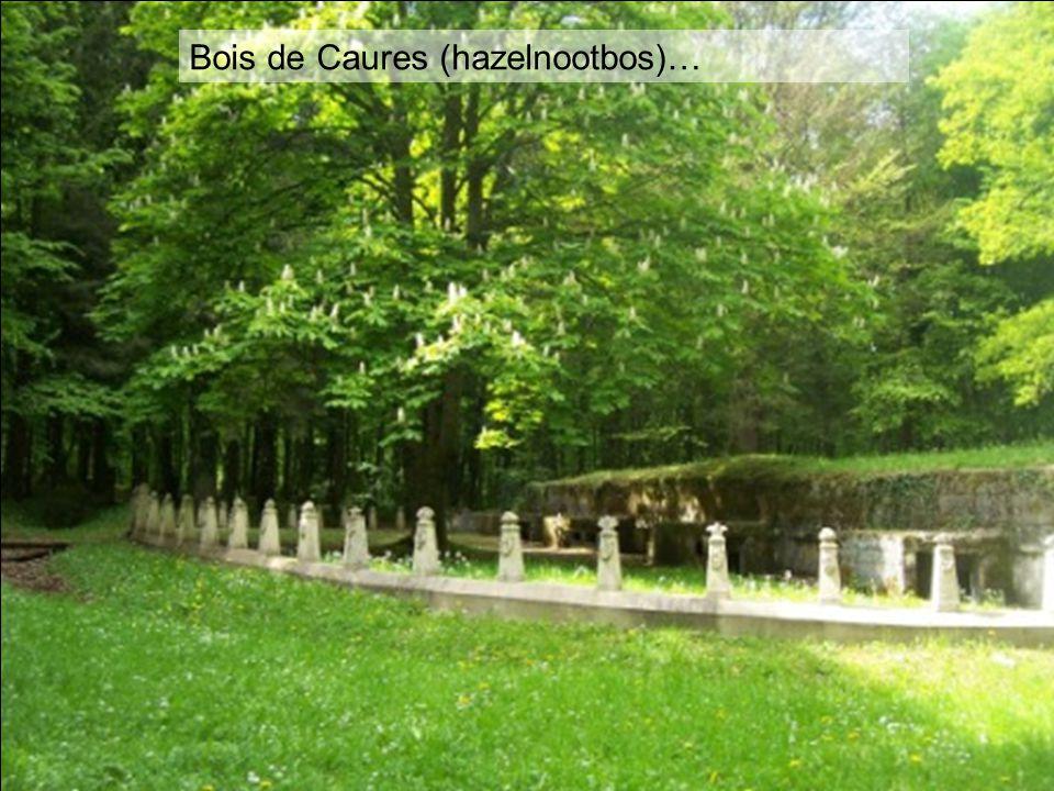 Bois de Caures (hazelnootbos)…